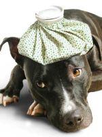 Отравление у собаки - лечение в домашних условиях