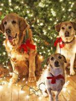 Как украсить елку в 2018 год собаки - интересные идеи для оформления новогоднего дерева