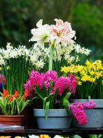 К чему снятся цветы в горшках?