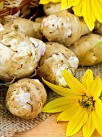 Земляная груша топинамбур - полезные свойства для организма