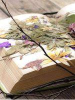 Как сделать гербарий в школу?