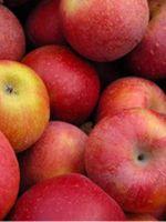 Как хранить яблоки на зиму?