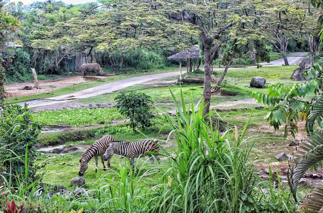 Территория отеля Mara River Safari Lodge, Бали