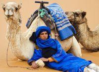 К верблюдам в Марокко относятся с почтением