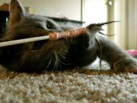 Игрушки для котят своими руками36
