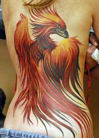 Тату птица феникс 1