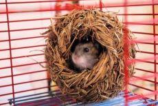 домик для хомячка