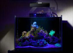 Ультрафиолетовая лампа для аквариума