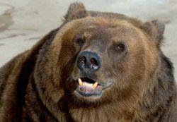 как нарисовать медведя