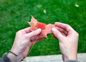 Осенний букет своими руками в школу 2