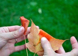 Осенний букет своими руками в школу 3