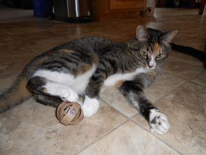 Игрушки для котят своими руками45