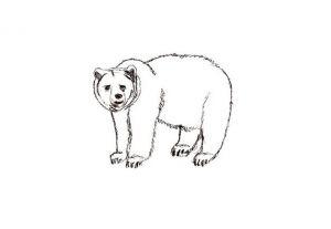 как нарисовать медведя 17