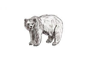 как нарисовать медведя 18