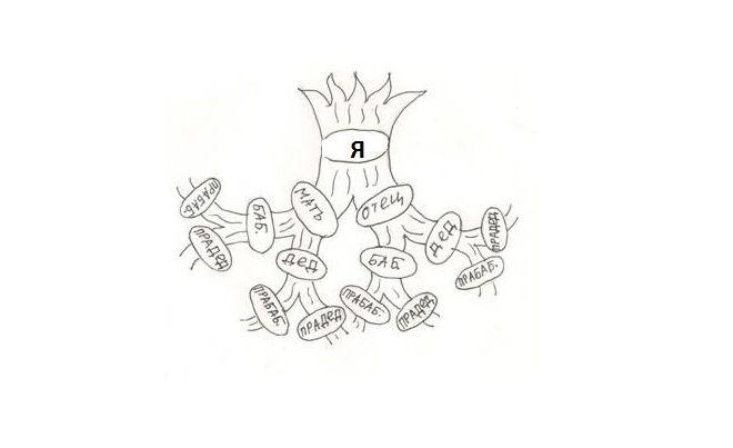 Как нарисовать семейное дерево в школу19