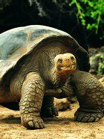 К чему снится большая черепаха?