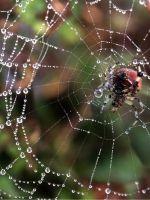 Как нарисовать паука?