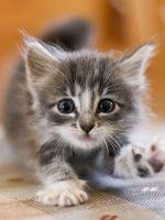 Как назвать котенка девочку?
