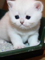 Как отучить котенка гадить?