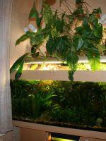 Фитофильтр для аквариума своими руками