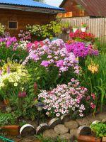 Какие цветы посадить на даче?