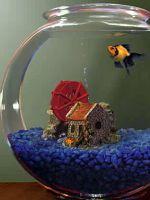 Какую воду заливать в аквариум?