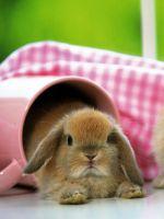 Можно ли купать декоративных кроликов?