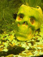 Почему зеленеет вода в аквариуме?