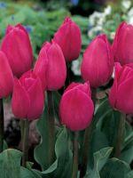 Тюльпаны отцвели - что дальше?