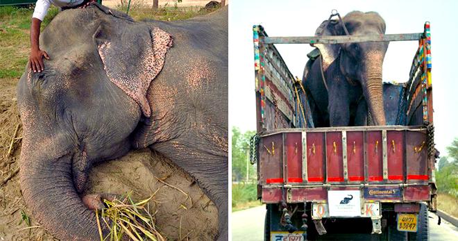 Картинки по запросу Когда его спасли после 50 лет мучений, слон заплакал