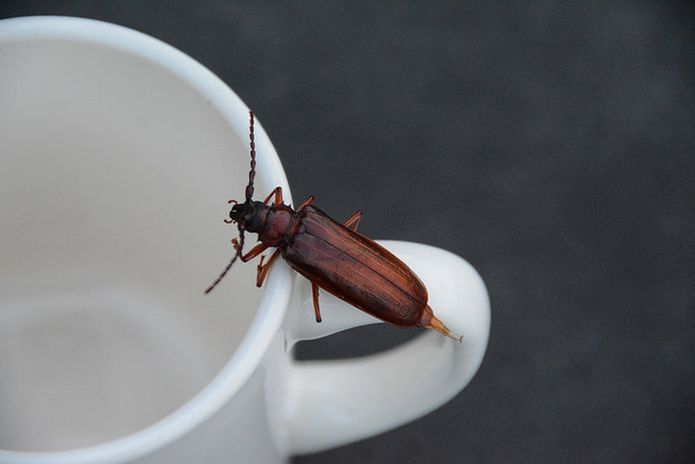 Сделайте ловушку для тараканов