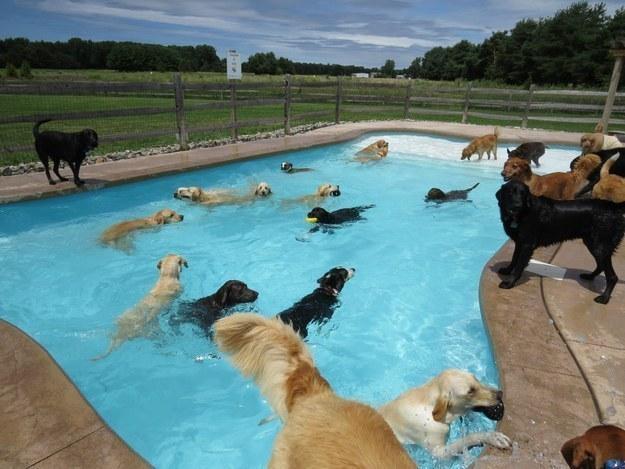 Лучшая вечеринка у бассейна