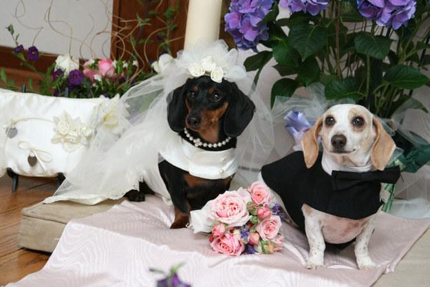 Лучшая свадьба в мире