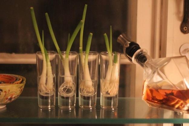 Вы можете вырастить зеленый лук из луковиц