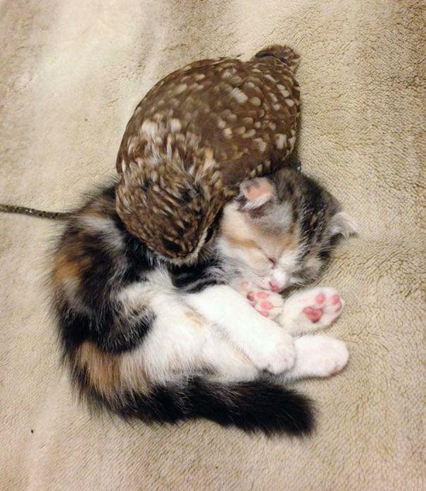 Фуку и Маримо спят