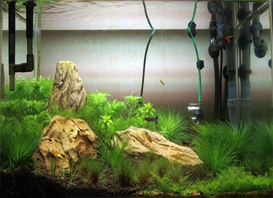 Из чего сделать внешний фильтр для аквариума своими руками фото 501