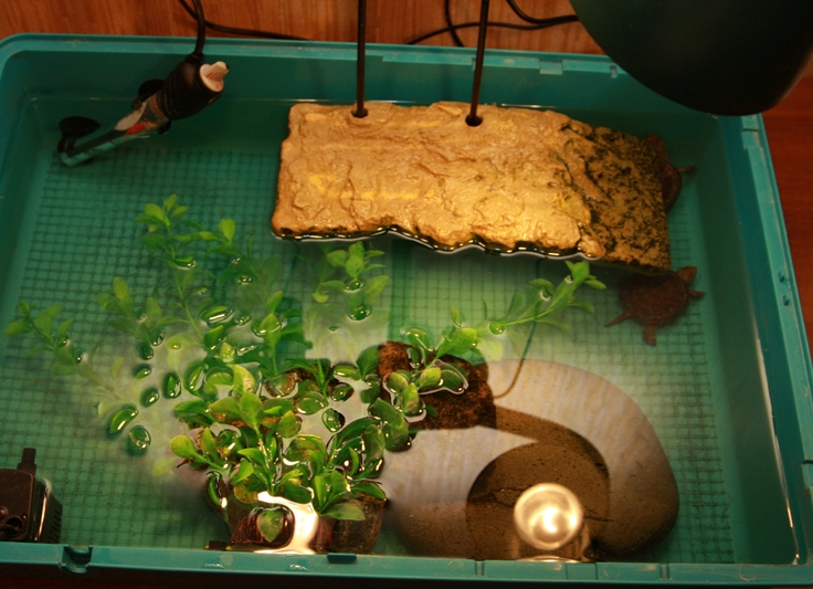 Сделать островок для черепахи своими руками