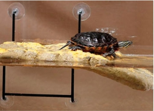 Из чего сделать островок для черепахи своими