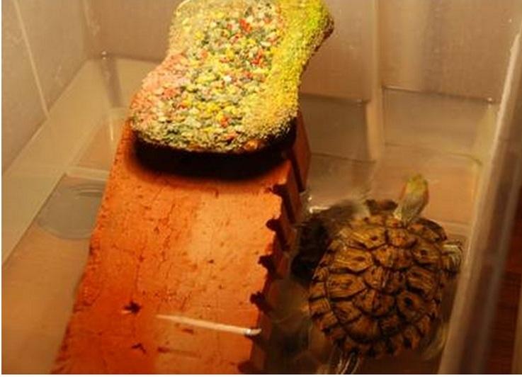 Как сделать островок для черепахи своими руками фото 11