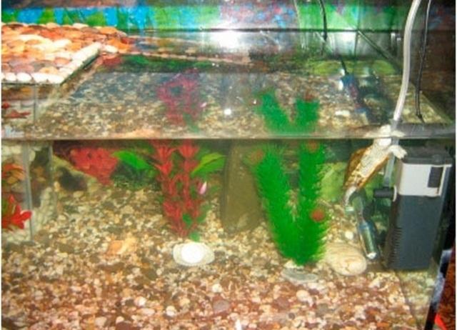 Островок для красноухой черепахи своими руками из подручных материалов фото 91