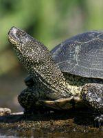 Как сделать сушу для черепахи в домашних условиях