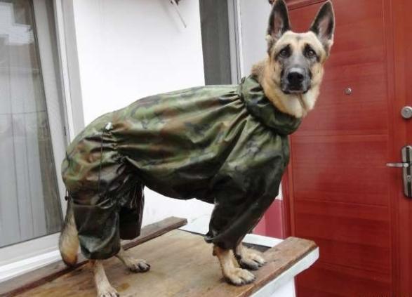 Дождевик собаке своими руками