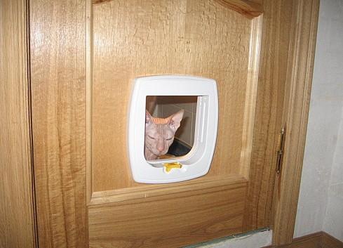 Дверки для кошек в туалет своими руками 25