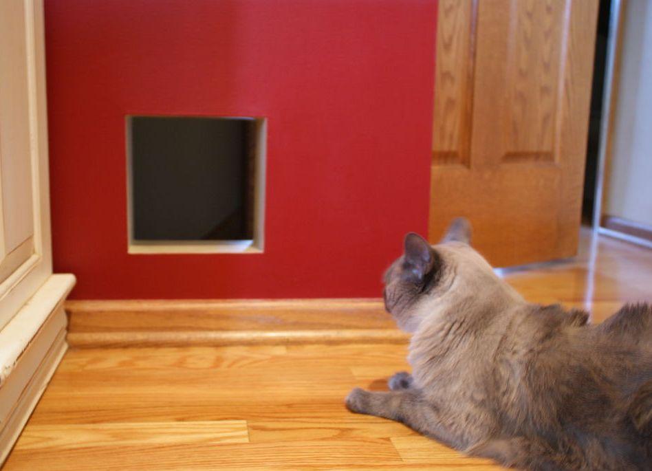 Дверца для кошек в дверь своими руками 5263