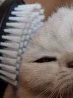Расческа для кошек