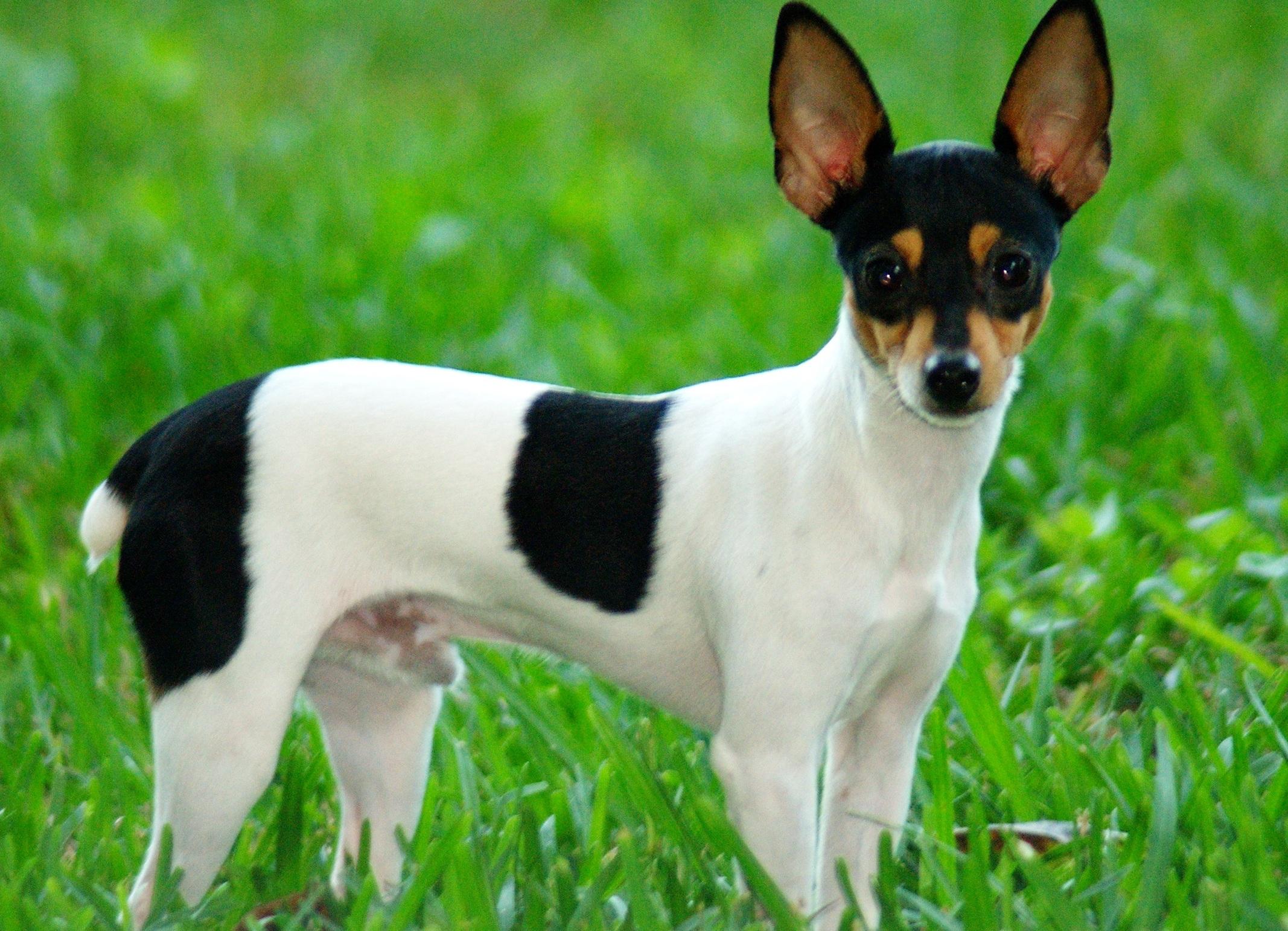 небольшие собаки породы с фото