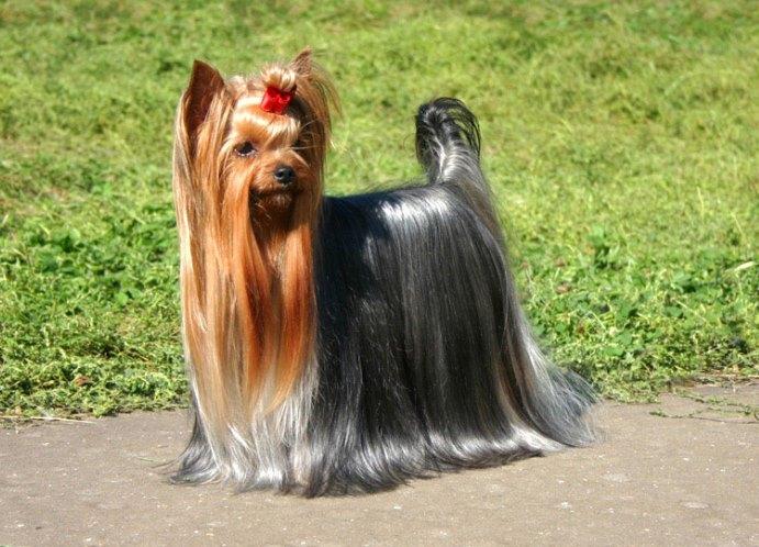 самая маленькая собака фото