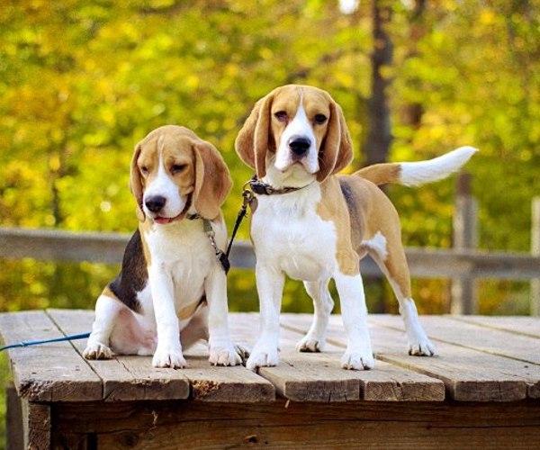 ритуалы при знакомстве собак