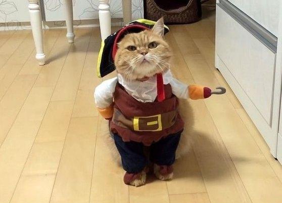 Новогодние костюмы для кошек
