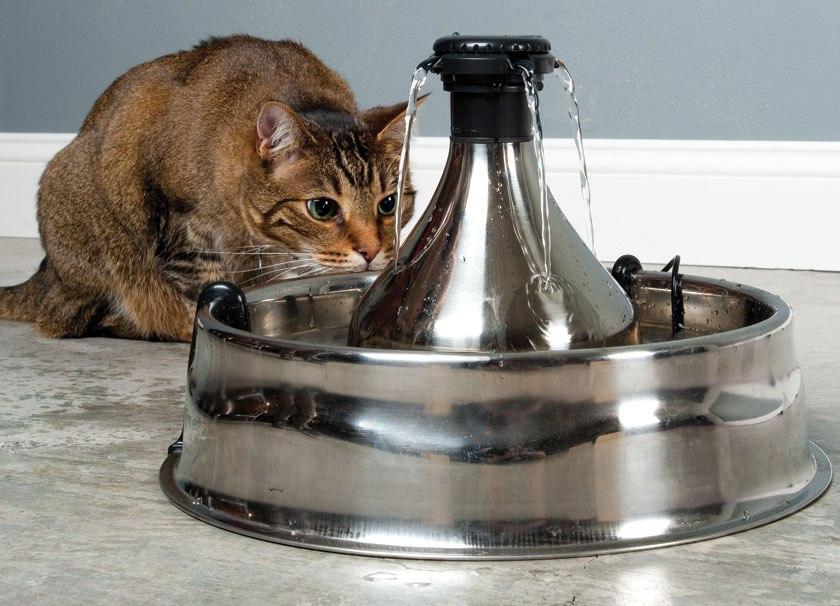 Поилка для котов